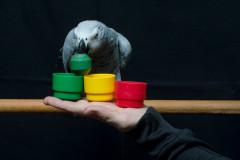 Papegojeshow-Kasper-Jensen-2020-44