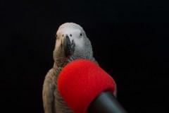 Papegojeshow-Kasper-Jensen-2020-47